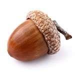acorn_bullet